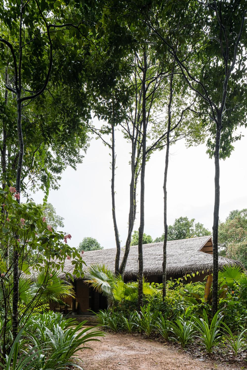 Phú Quốc: Spa giữa rừng rậm được báo Mỹ khen ngợi hết lời - Ảnh 13.