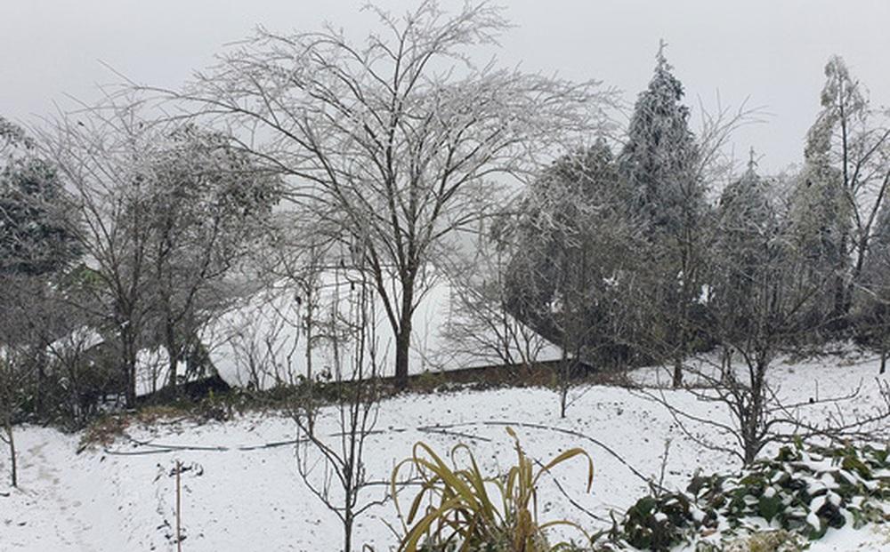 Cận cảnh tuyết rơi trắng xóa tại Y Tý, Sa Pa