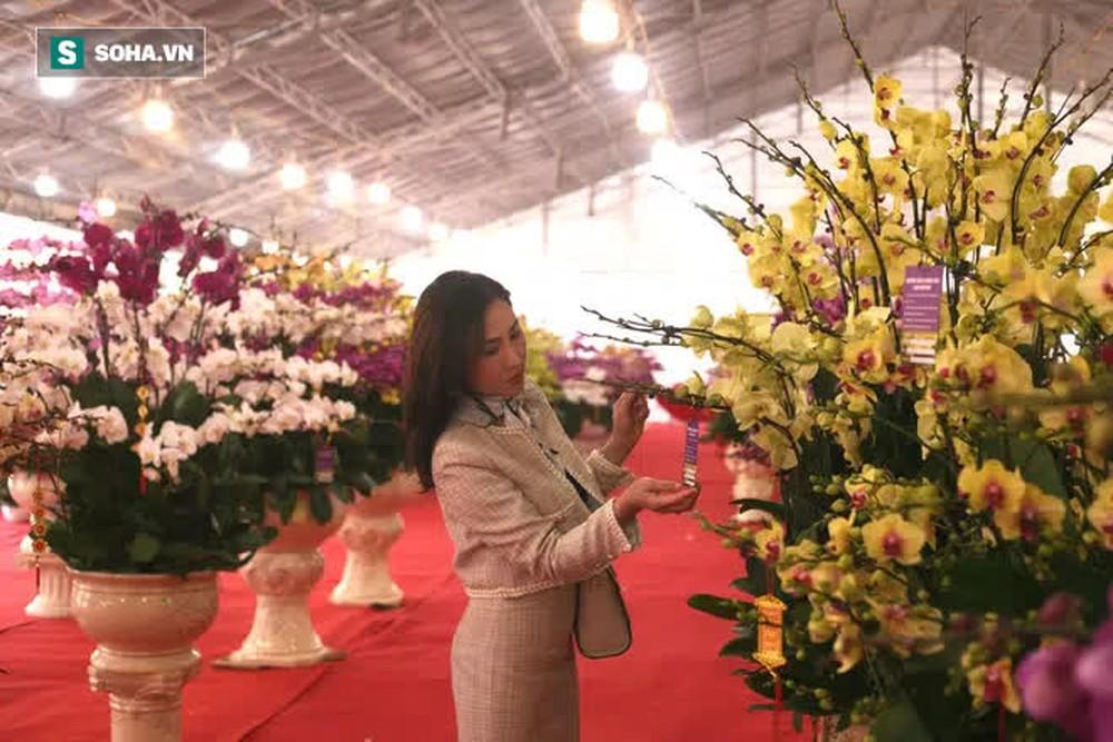 Mãn nhãn dàn lan hồ điệp bạc tỷ ở Hà Nội, đại gia đua nhau dốc ví mua về chơi Tết - Ảnh 12.