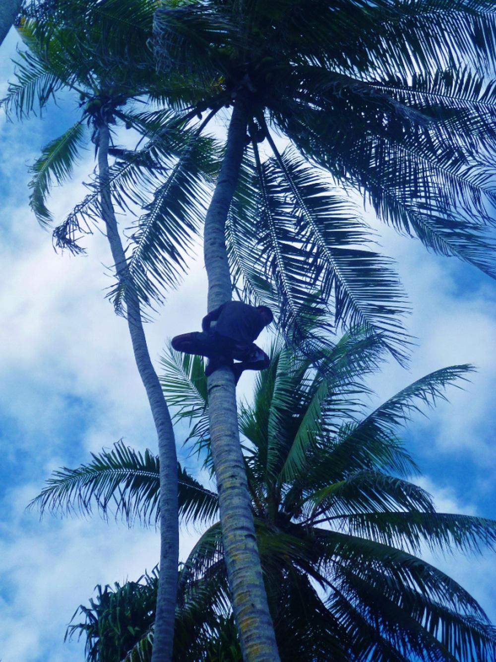 Đêm mưa, gia đình sợ hãi nghe tiếng trẻ con cười từ thân cây dừa nên mời thầy trừ tà rồi ngỡ ngàng khi biết nguyên nhân - Ảnh 1.