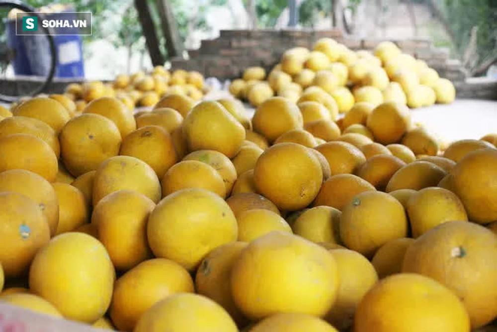 Trồng loại quả chín vàng, để càng héo càng thơm ngon, nông dân Hà Nội thu nửa tỷ vụ Tết - Ảnh 3.