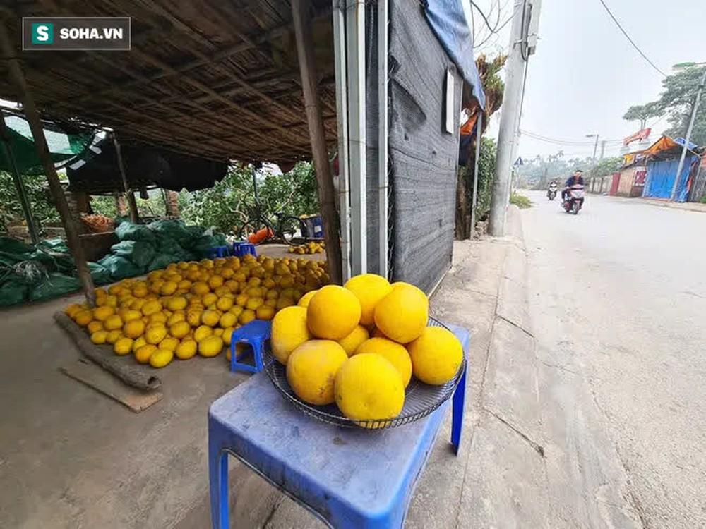 Trồng loại quả chín vàng, để càng héo càng thơm ngon, nông dân Hà Nội thu nửa tỷ vụ Tết - Ảnh 1.