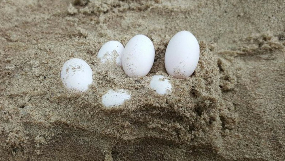 Mang trứng lạ trên núi về cho gà ấp, thứ bên trong vừa nở ra, người đàn ông vội đem đi thả, không ngờ lại phát tài nhờ phúc báo - Ảnh 3.