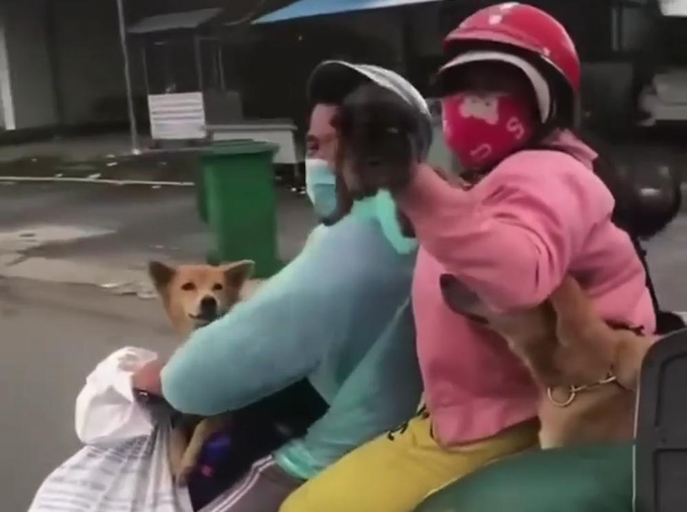 Sau vụ tiêu hủy 15 con chó, Cà Mau đã chuẩn bị lồng dành cho thú nuôi của bà con từ vùng dịch về  - Ảnh 1.