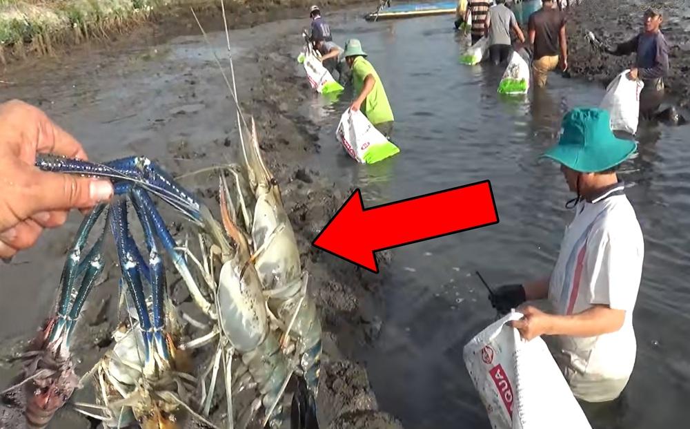 Tát cạn ao nước bỏ hoang cả năm trời, nhóm người thu hoạch 'khủng' dưới đáy ao