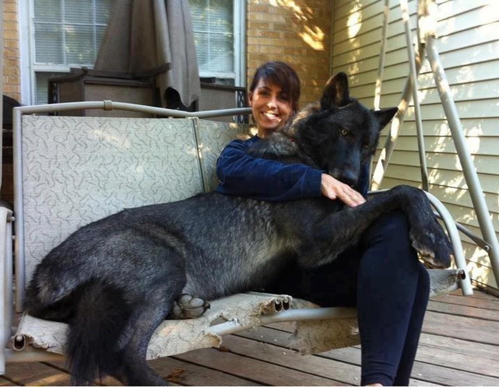 Con vật to lớn tấn công chó cưng, chủ nhân quay được đoạn clip vẫn không dám chắc đó là con gì - Ảnh 5.