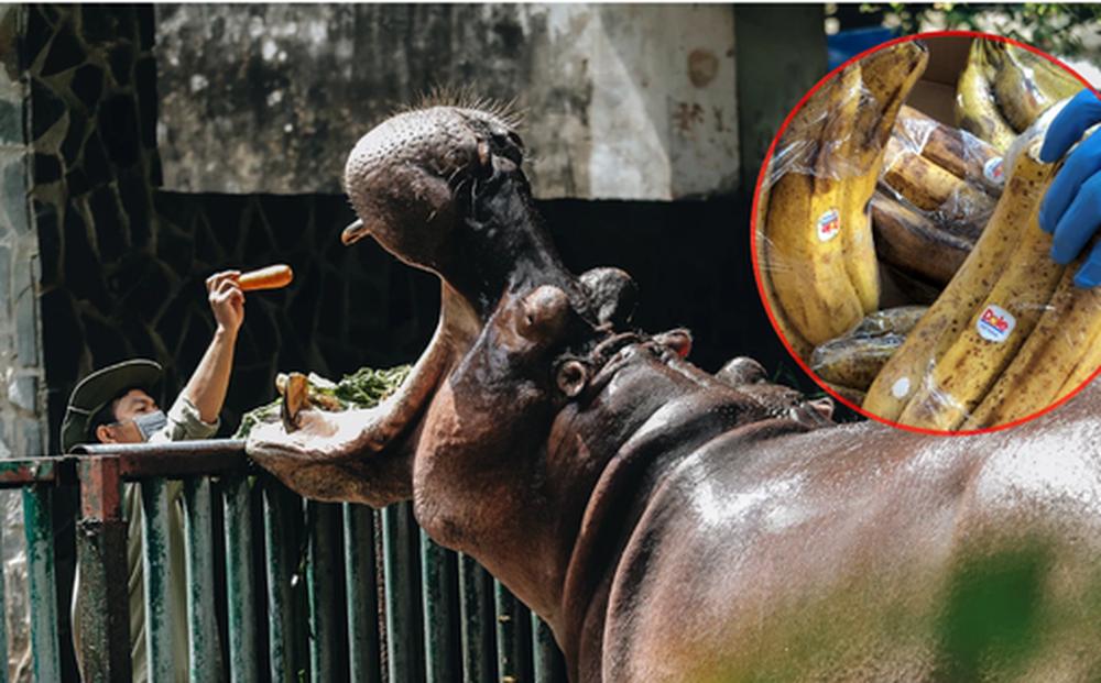 Thảo Cầm Viên Sài Gòn được AEON Việt Nam hỗ trợ thực phẩm cho bầy thú: 2 đợt/tuần, mỗi đợt khoảng 200kg