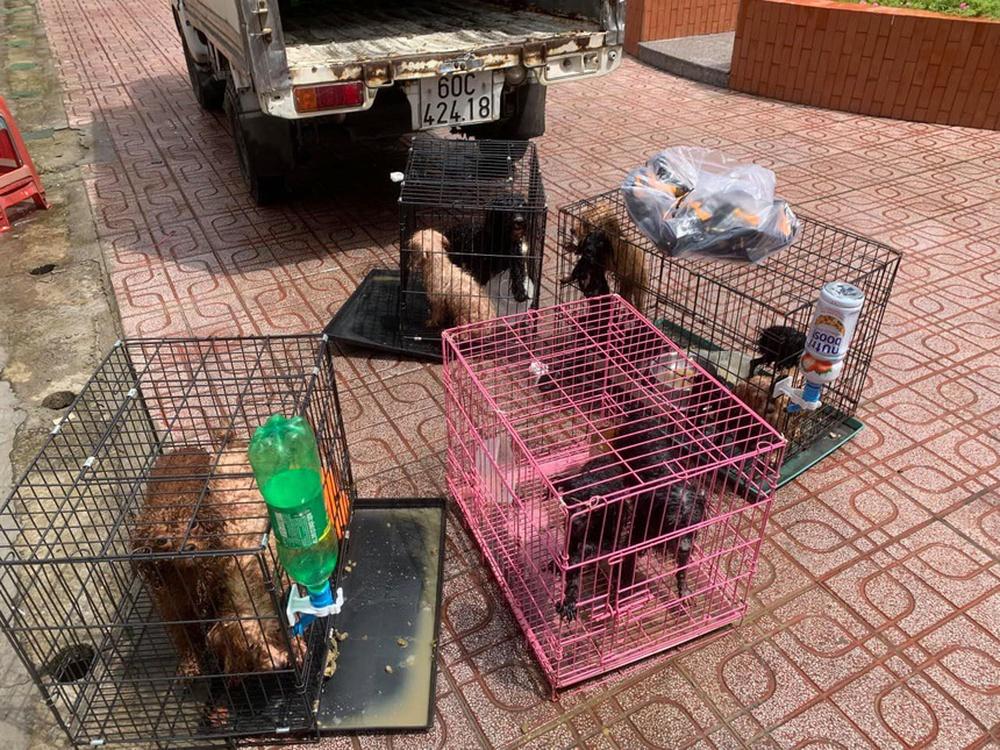 Cán bộ phường nuôi giúp đàn chó của gia đình F0 đi cách ly: Chăm sóc vài chú chó đâu là vấn đề - Ảnh 2.