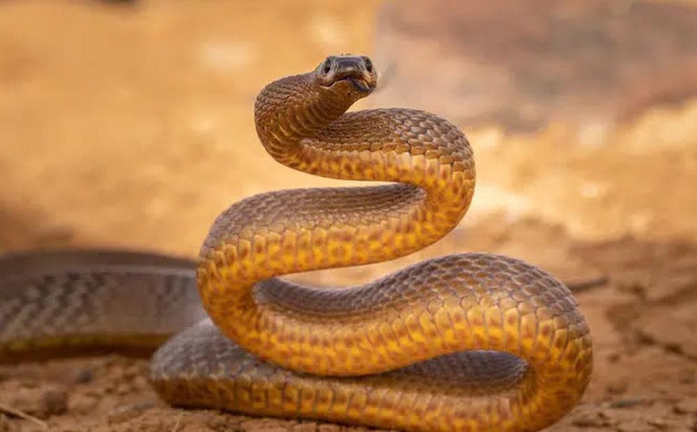 Trẻ con đánh đố: Tại sao có rất nhiều loài động vật nguy hiểm sinh sống ở Úc?