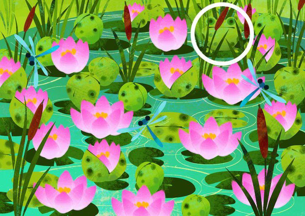 Thách thức thị giác 3 giây: Đố bạn tìm ra con ếch xanh trong đầm sen nở rộ - Ảnh 2.
