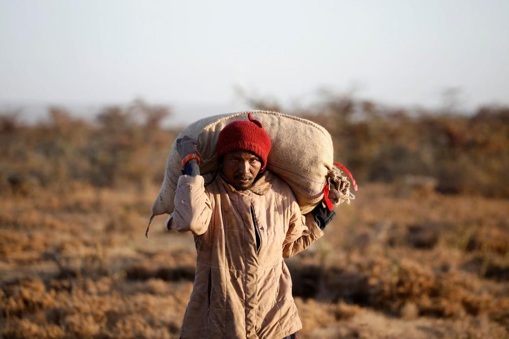 Từng đàn châu chấu chục triệu con bủa vây giăng kín trời Đông Phi: Người dân tương kế tựu kế thu lợi lớn - Ảnh 12.