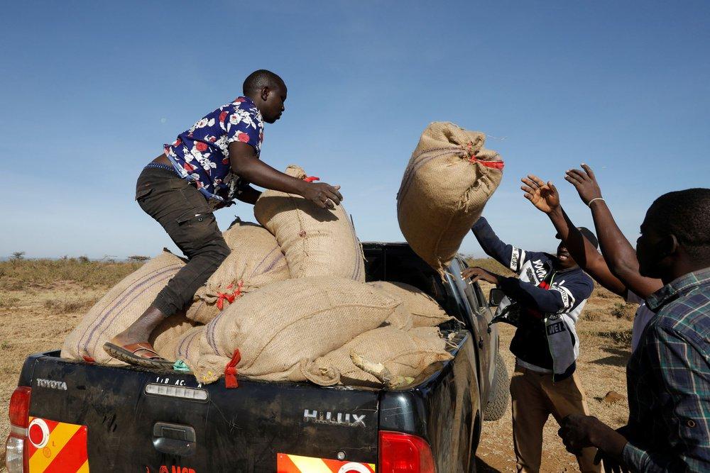 Từng đàn châu chấu chục triệu con bủa vây giăng kín trời Đông Phi: Người dân tương kế tựu kế thu lợi lớn - Ảnh 14.