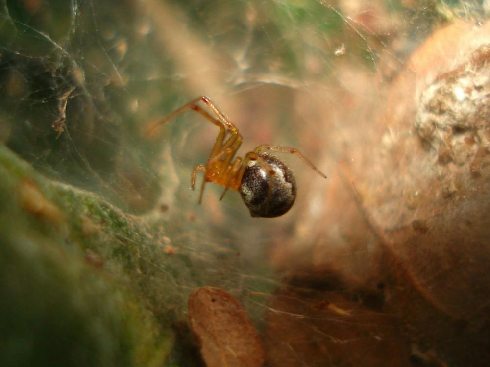 Nhốt nhện siêu nhỏ cùng con mồi lớn hơn nó nhiều lần vào cái hộp: Chuyên gia không tin vào mắt mình khi chứng kiến cảnh tượng bên trong - Ảnh 2.