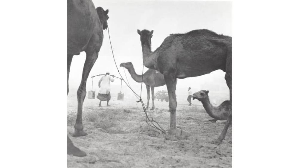 Dubai nghèo khó: Hình ảnh khó tin của thành phố Trung Đông trước khi cái giàu ập tới  - Ảnh 5.