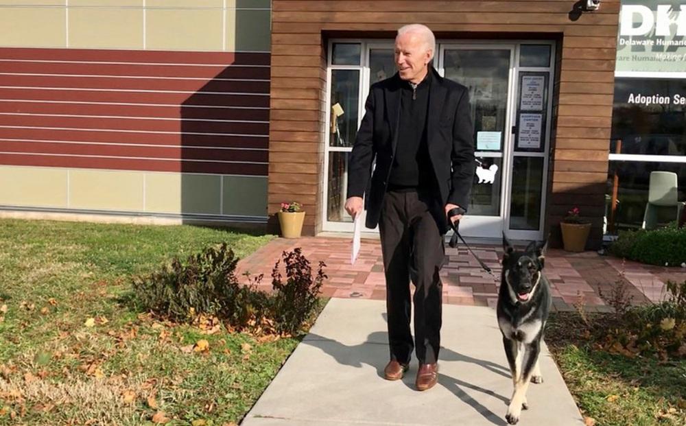 Ông Biden bênh vực chó cưng sau sự cố cắn nhân viên Nhà Trắng