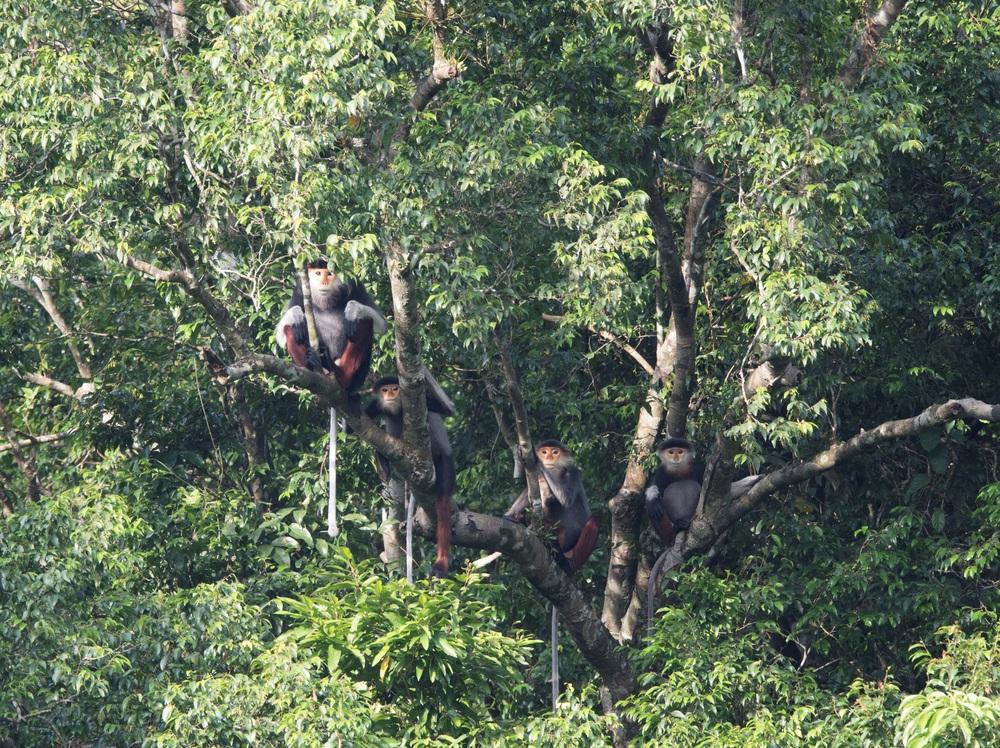 Ngắm những loài thú hoang dã cực quý hiếm Khu dự trữ thiên nhiên Động Châu - Khe Nước Trong - Ảnh 1.