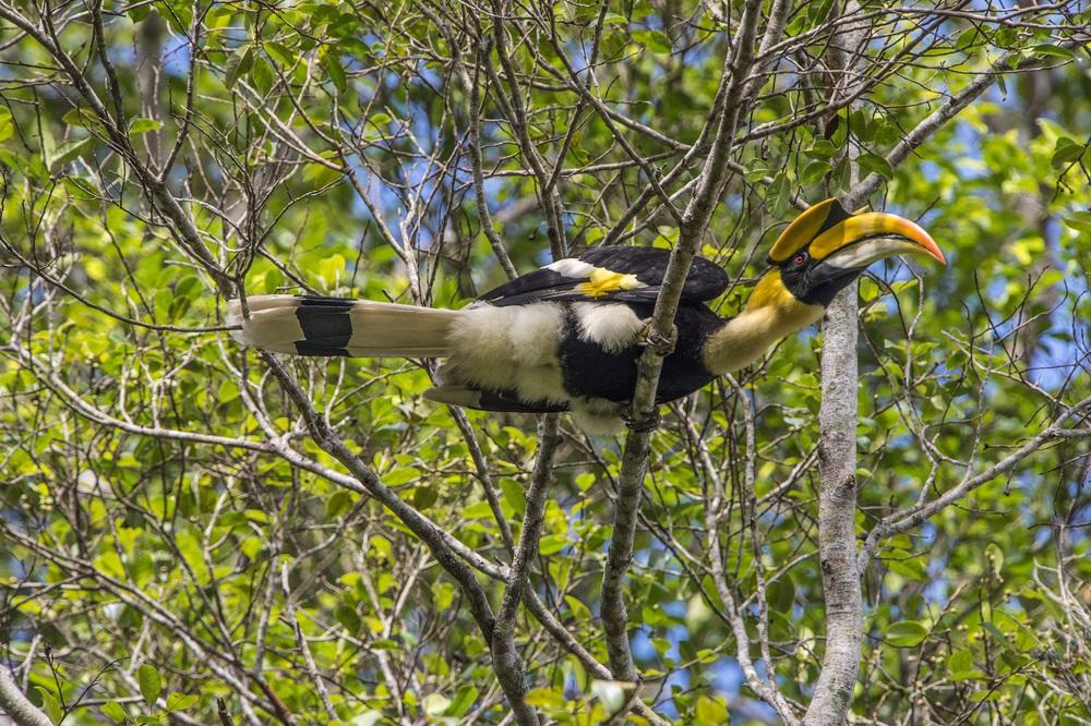 Ngắm những loài thú hoang dã cực quý hiếm Khu dự trữ thiên nhiên Động Châu - Khe Nước Trong - Ảnh 3.