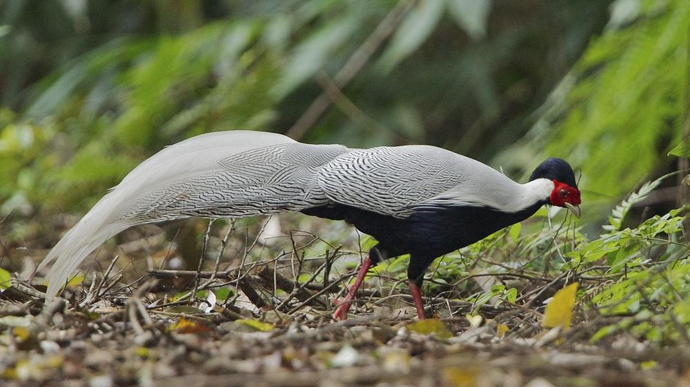 Ngắm những loài thú hoang dã cực quý hiếm Khu dự trữ thiên nhiên Động Châu - Khe Nước Trong - Ảnh 4.