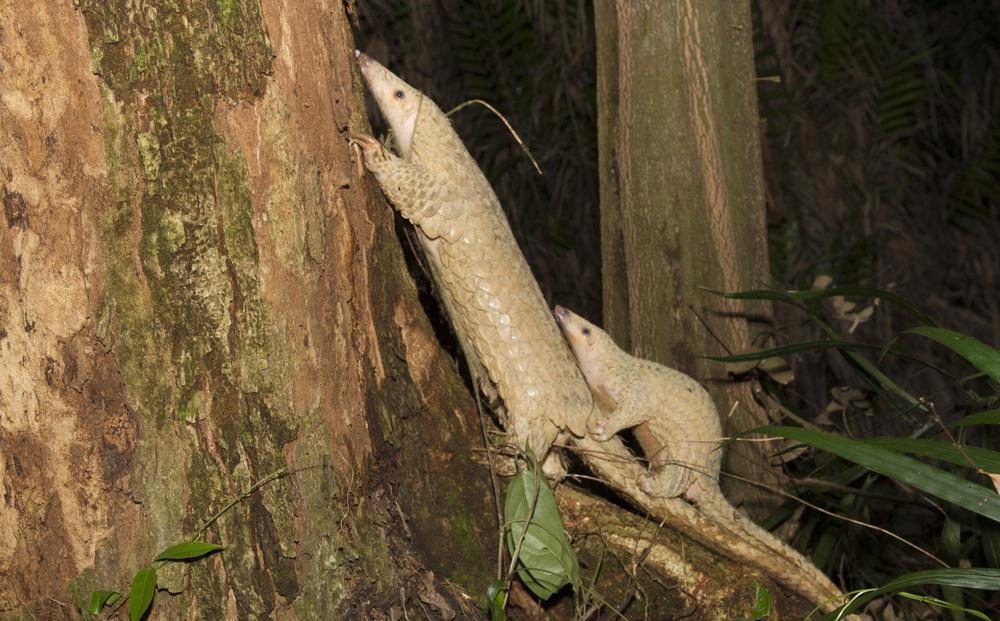 Ngắm những loài thú hoang dã cực quý hiếm Khu dự trữ thiên nhiên Động Châu - Khe Nước Trong