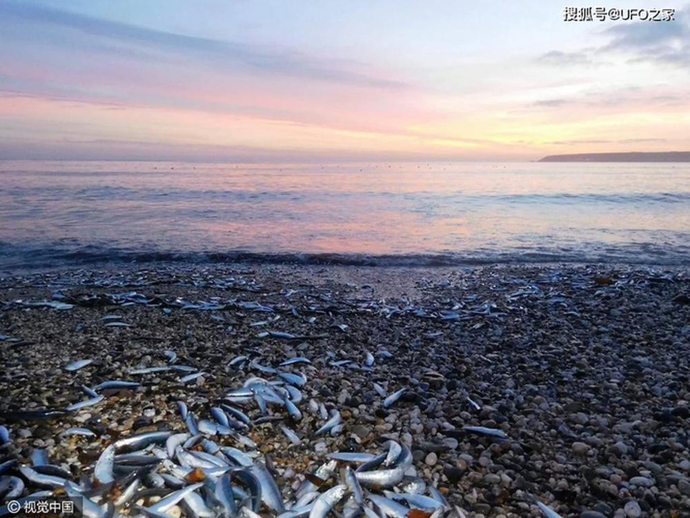 Sau trận động đất, cá chết hàng loạt xuất hiện ở bờ biển của Nhật Bản, chuyện gì sắp xảy ra? - Ảnh 2.