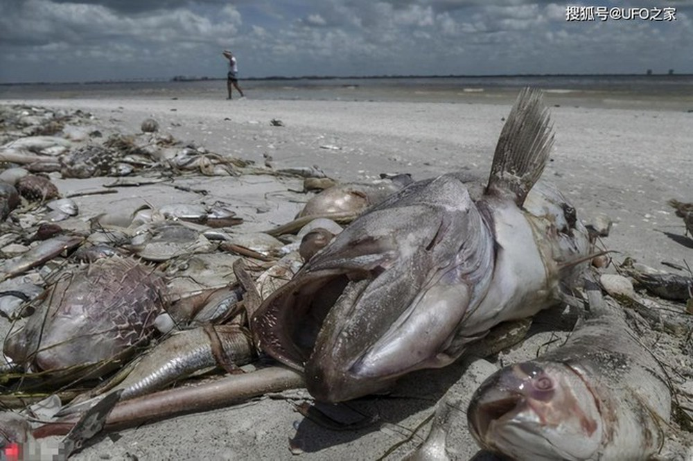 Sau trận động đất, cá chết hàng loạt xuất hiện ở bờ biển của Nhật Bản, chuyện gì sắp xảy ra? - Ảnh 1.