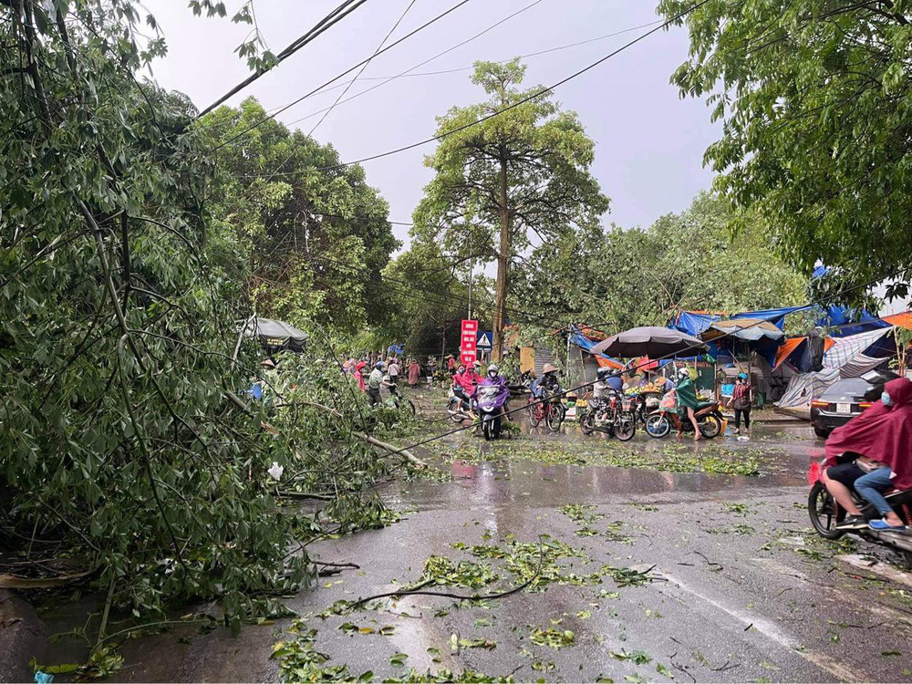 Hà Nội: Hàng loạt cây xanh bật gốc đổ rạp xuống đường sau cơn mưa lớn đầu mùa - Ảnh 2.