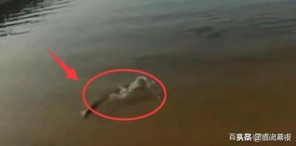 Mang cá ra hồ phóng sinh, vừa được vài phút, người phụ nữ sửng sốt trước cảnh tượng dưới mặt nước - Ảnh 2.