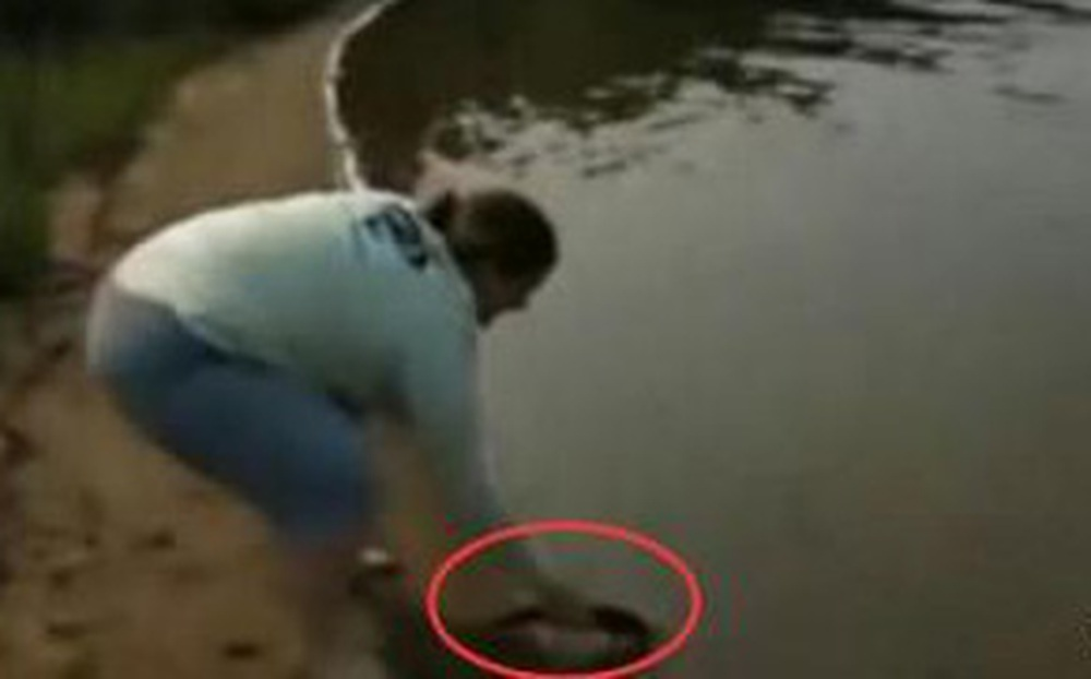 Mang cá ra hồ phóng sinh, vừa được vài phút, người phụ nữ sửng sốt trước cảnh tượng dưới mặt nước