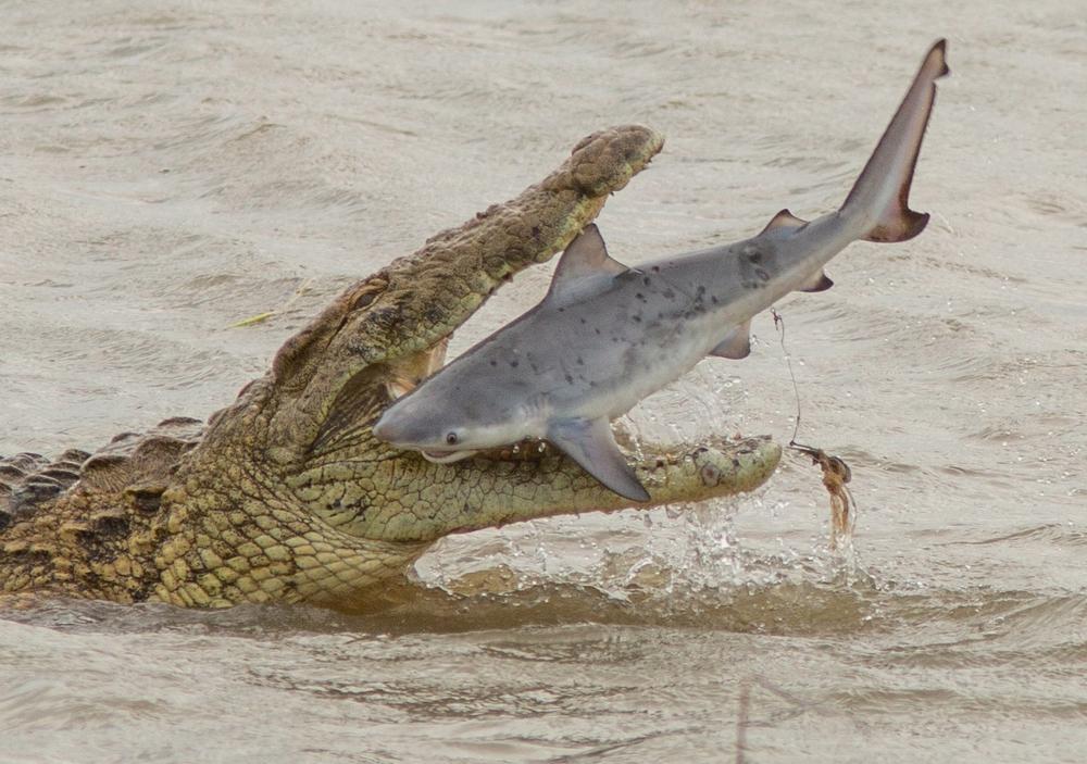 16 ví dụ cho thấy thiên nhiên Úc đáng sợ ra sao: Ai yếu tim chắc ngất khi gặp vị khách số 3 - Ảnh 1.