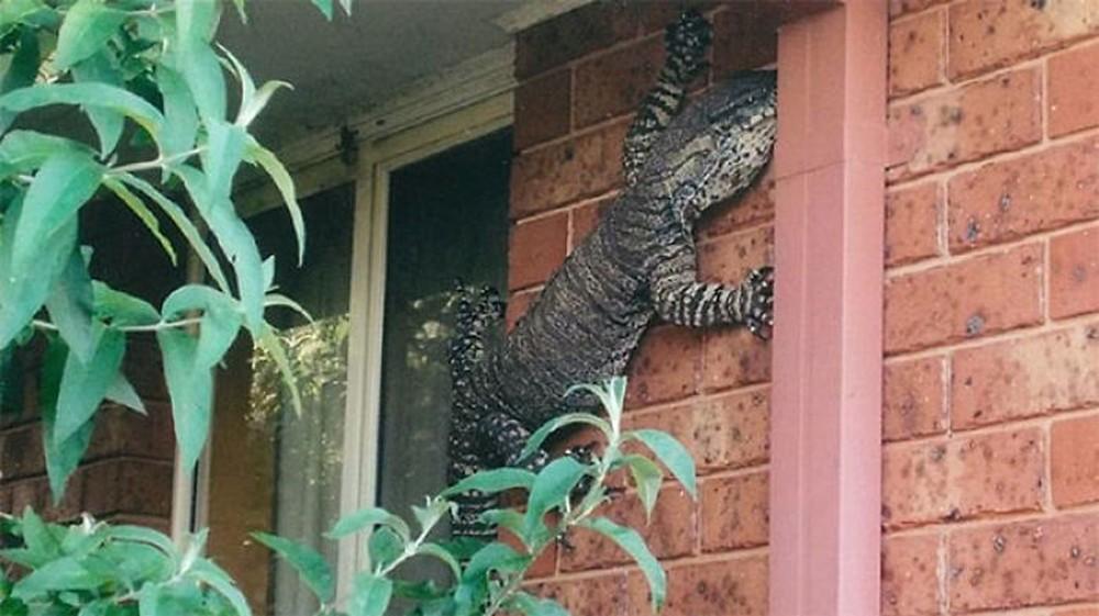 16 ví dụ cho thấy thiên nhiên Úc đáng sợ ra sao: Ai yếu tim chắc ngất khi gặp vị khách số 3 - Ảnh 3.