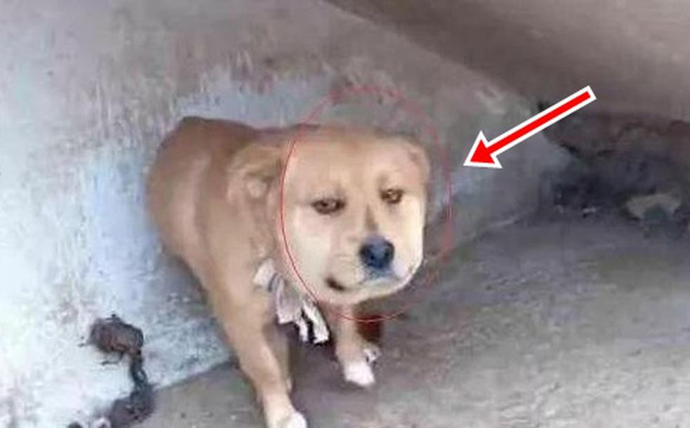 """Thấy cún cưng đột nhiên tha cơm vào chỗ kín, chủ nhân tò mò theo dõi rồi bật cười khi phát hiện ra """"động cơ"""" của con vật"""