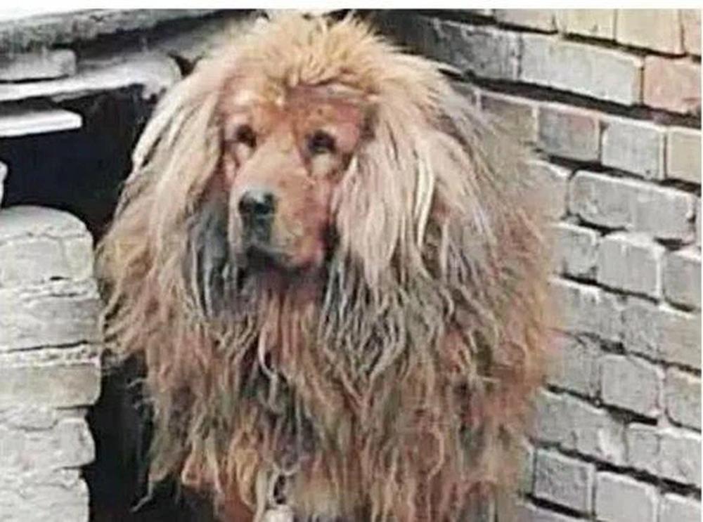 Mang chó cưng về quê nhờ người thân nuôi giúp, nửa tháng sau gặp lại, chủ nhân bàng hoàng không dám tin vào cảnh tượng trước mắt - Ảnh 2.