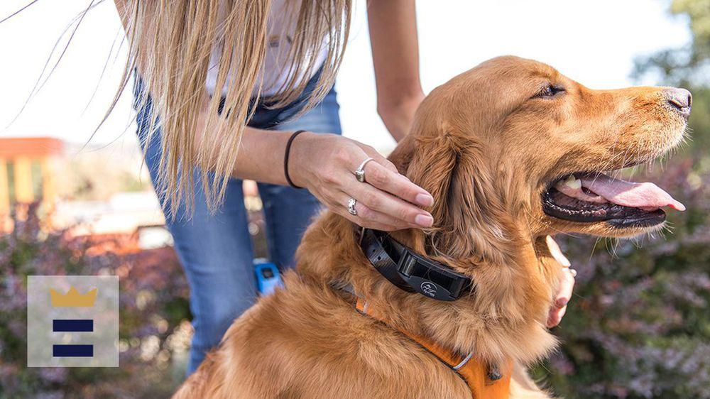 Thấy chó của mình bị chó bò tấn công, nhà huấn luyện ra tay thu phục bằng vòng kim cô - Ảnh 2.