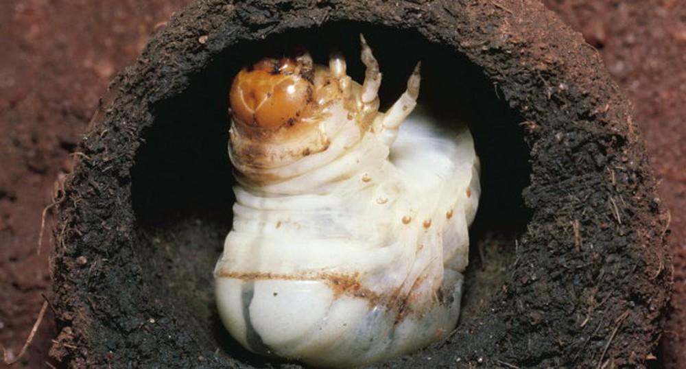 Người nông dân đào được quả cầu bí ẩn trong hang đất: Sau khi dùng xẻng đập vỡ nó, anh lập tức hoảng sợ - Ảnh 5.