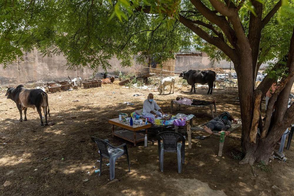 Không thể đến bệnh viện, bệnh nhân COVID-19 Ấn Độ đi dưới tán cây để tăng oxy  - Ảnh 1.