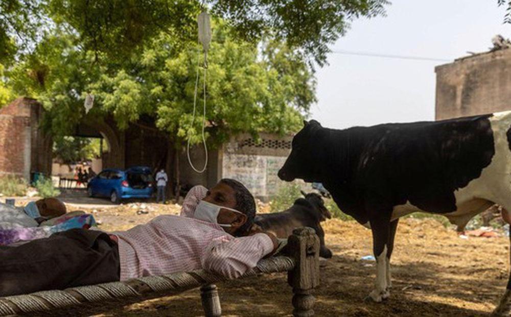 Không thể đến bệnh viện, bệnh nhân COVID-19 Ấn Độ đi dưới tán cây để tăng oxy