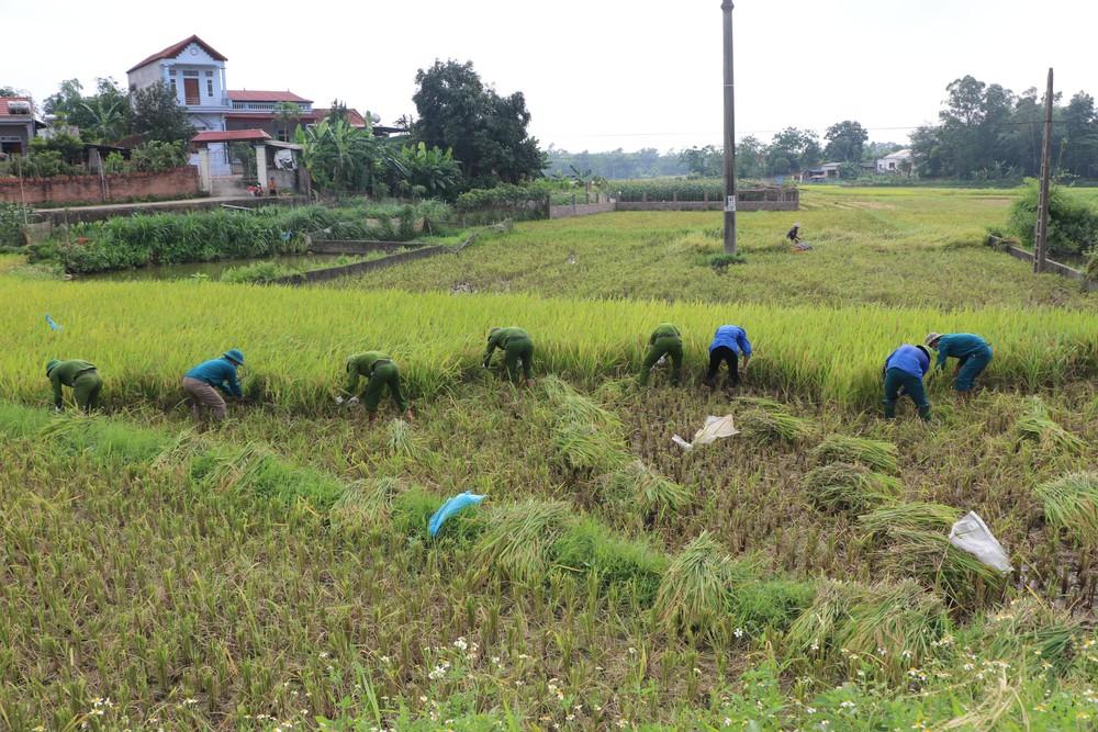 Công an xuống xã lội ruộng gặt lúa giúp các F1, F2 đang phải cách ly - Ảnh 3.