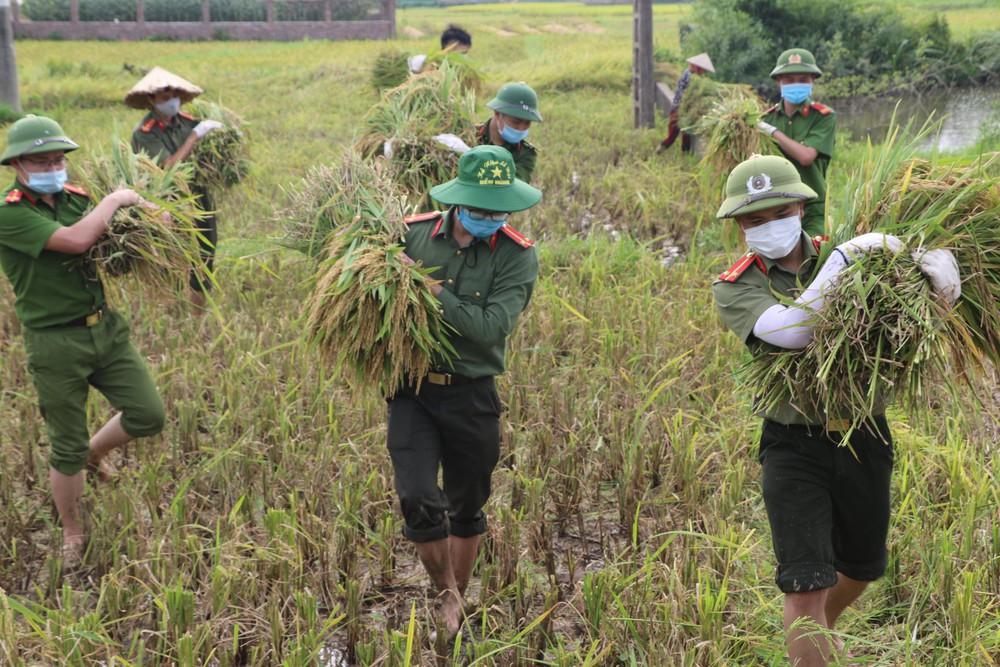 Công an xuống xã lội ruộng gặt lúa giúp các F1, F2 đang phải cách ly - Ảnh 2.
