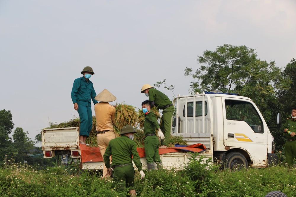 Công an xuống xã lội ruộng gặt lúa giúp các F1, F2 đang phải cách ly - Ảnh 8.