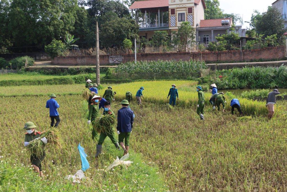 Công an xuống xã lội ruộng gặt lúa giúp các F1, F2 đang phải cách ly - Ảnh 4.