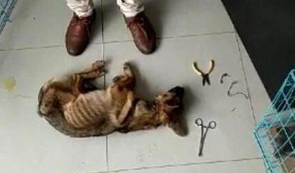 Phát hiện dưới chân hàng rào sắt có một cái đầu chó nên vội chạy đến kiểm tra, người đàn ông thoáng rùng mình vì cảnh tượng trước mắt - Ảnh 3.