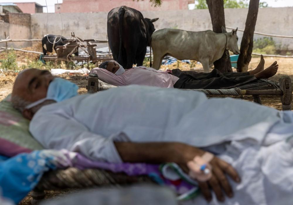 Địa ngục nhếch nhác ở Ấn Độ: Bệnh nhân ở nhờ chuồng gia súc, nằm truyền dịch cạnh trâu bò nhởn nhơ gặm cỏ - Ảnh 7.