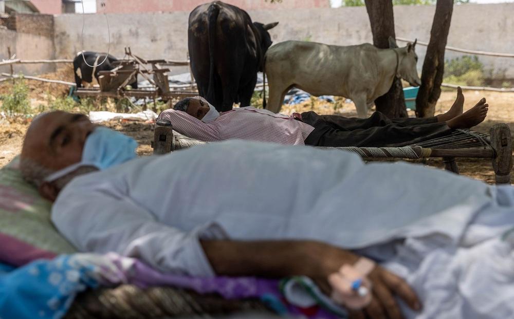"""""""Địa ngục"""" nhếch nhác ở Ấn Độ: Bệnh nhân """"ở nhờ"""" chuồng gia súc, nằm truyền dịch cạnh trâu bò nhởn nhơ gặm cỏ"""