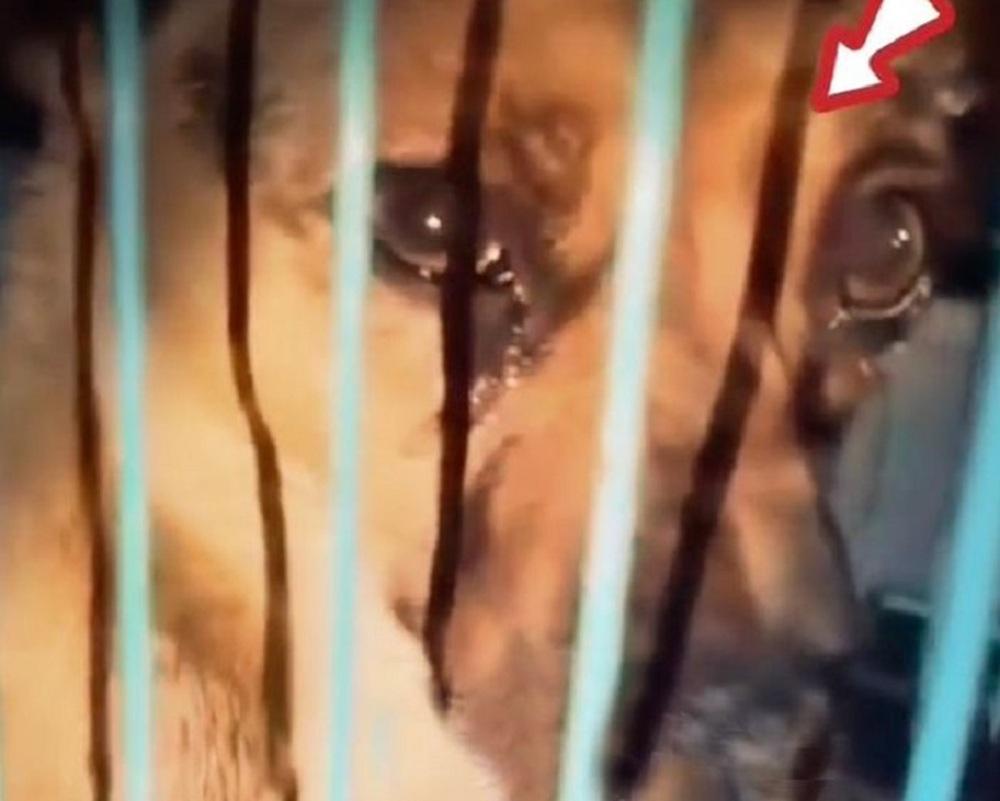 Chú chó mừng rơi nước mắt vì được giải cứu ngay khi sắp vào lò mổ - Ảnh 1.
