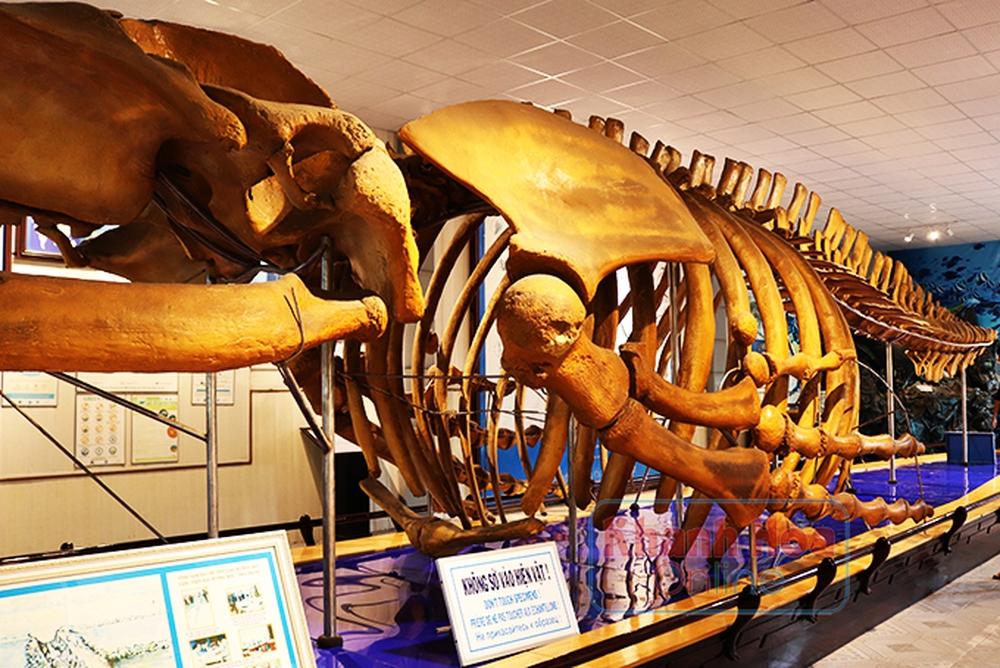 Năm 1994, một người nông dân ở Nam Định bất ngờ phát hiện bộ xương 10 tấn chôn vùi 200 năm dưới ruộng, đây là thứ gì? - Ảnh 7.