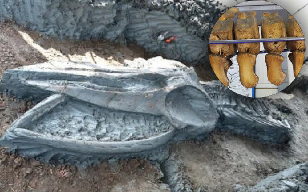 Năm 1994, một người nông dân ở Nam Định bất ngờ phát hiện bộ xương 10 tấn chôn vùi 200 năm dưới ruộng, đây là thứ gì?