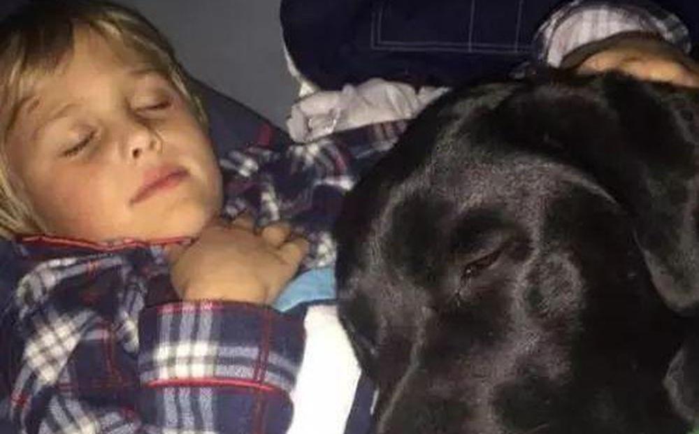 Chó cưng nửa đêm nhảy lên giường sủa liên tục, chủ nhân đi theo rồi cuống cuồng trước cảnh tượng nhìn thấy