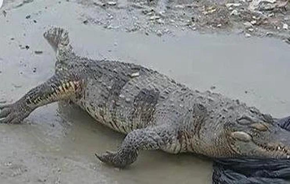 Tình cờ thấy mô hình cá sấu bên bờ sông liền đá mấy cái, người đàn ông thót tim khi nhận ra có gì đó sai sai chỗ hàm răng - Ảnh 2.