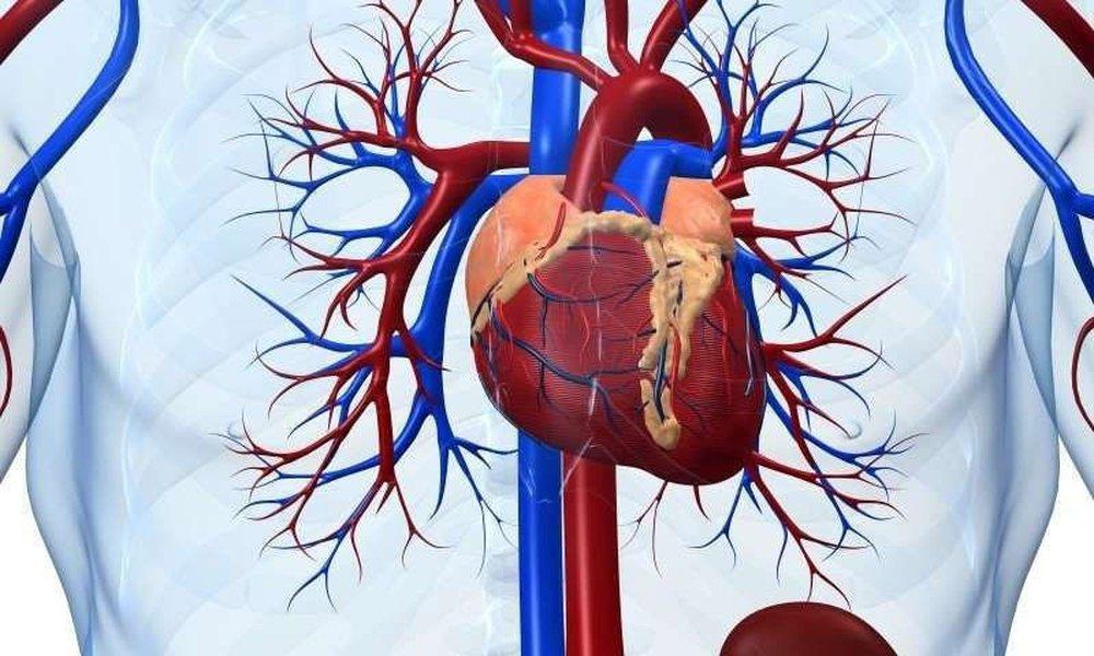 Hy Lạp: Ghi nhận 27 trường hợp bị viêm cơ tim sau khi tiêm vắc xin Covid-19 - Ảnh 2.