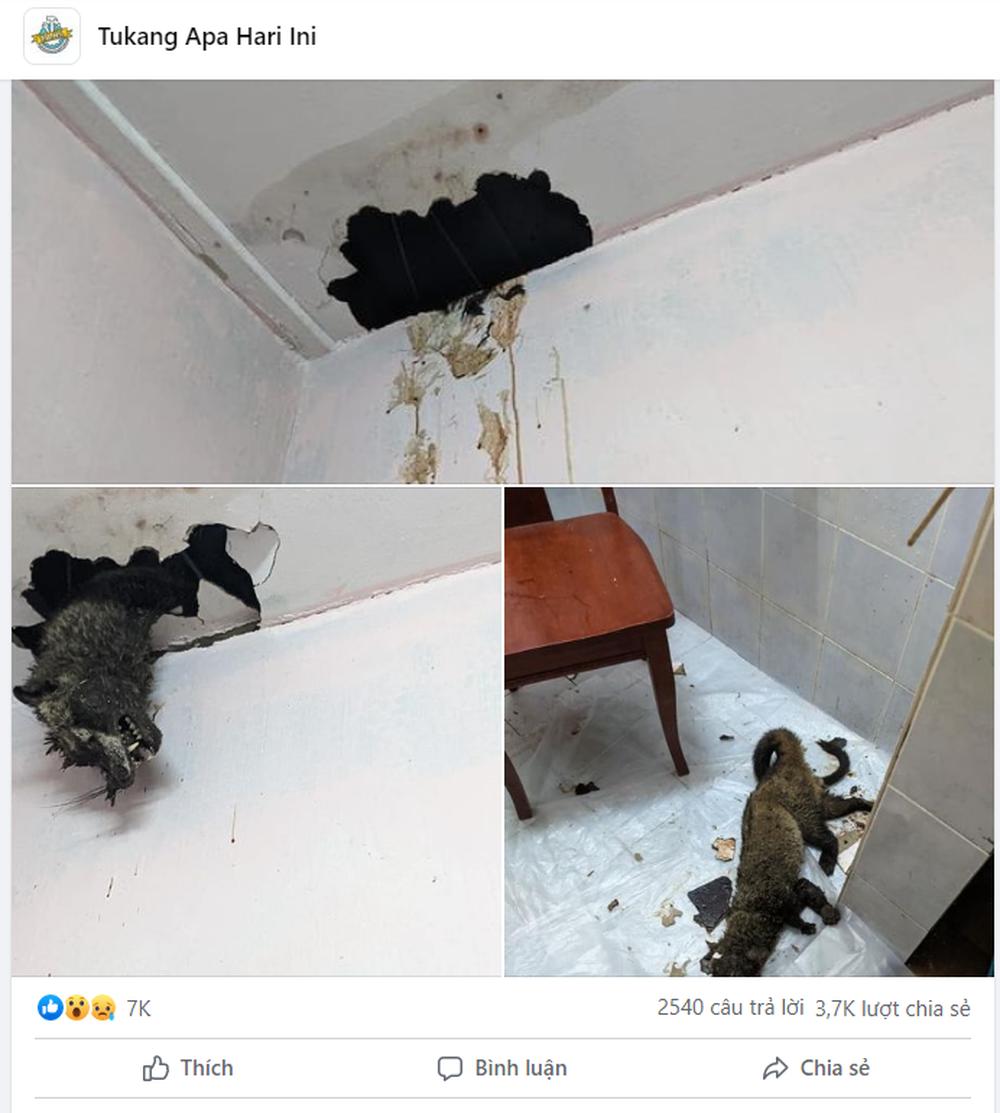 Thấy  chất lỏng màu vàng chảy xuống từ trần nhà, chủ nhà lên kiểm tra rồi kinh hãi trước kết quả - Ảnh 5.